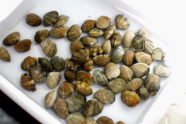 Как приготовить моллюсков в домашних условиях
